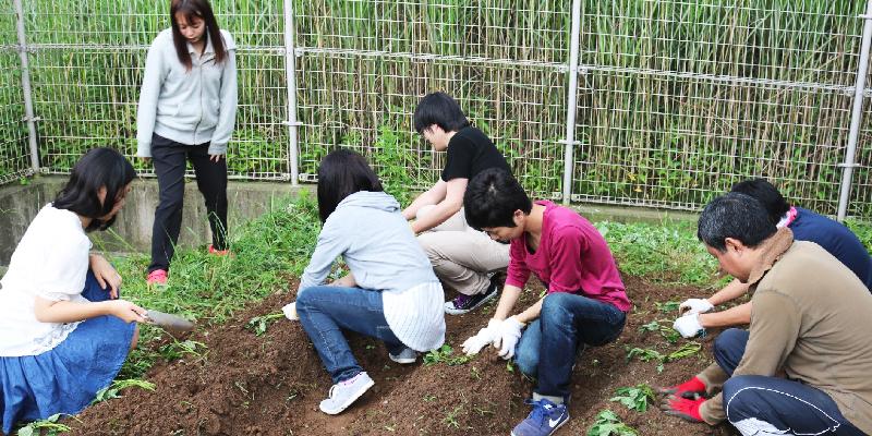 野菜づくり サークル